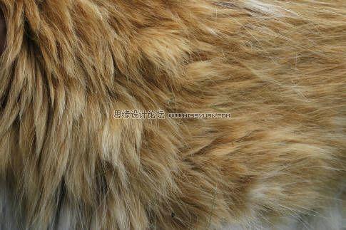 5张高清晰的动物皮毛图片