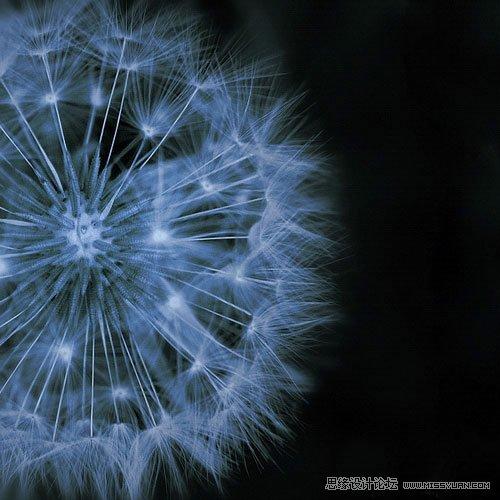 花卉攝影的抽象拍攝技法