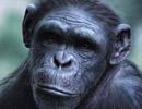 3ds Max制作逼真的黑猩猩教程
