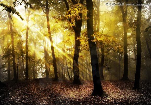 photoshop打造一个梦幻光斑的树林场景效果(3)
