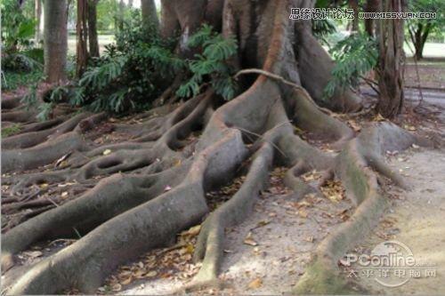 Photoshop合成制作树根人体超自然蜕变场景