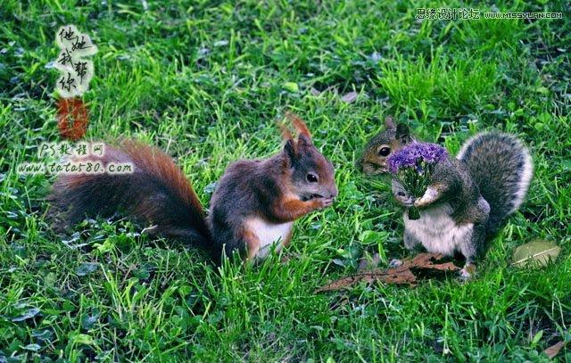 今日ps教程将通过两只可爱的小松鼠来进行讲述,主要涉及到的photosho