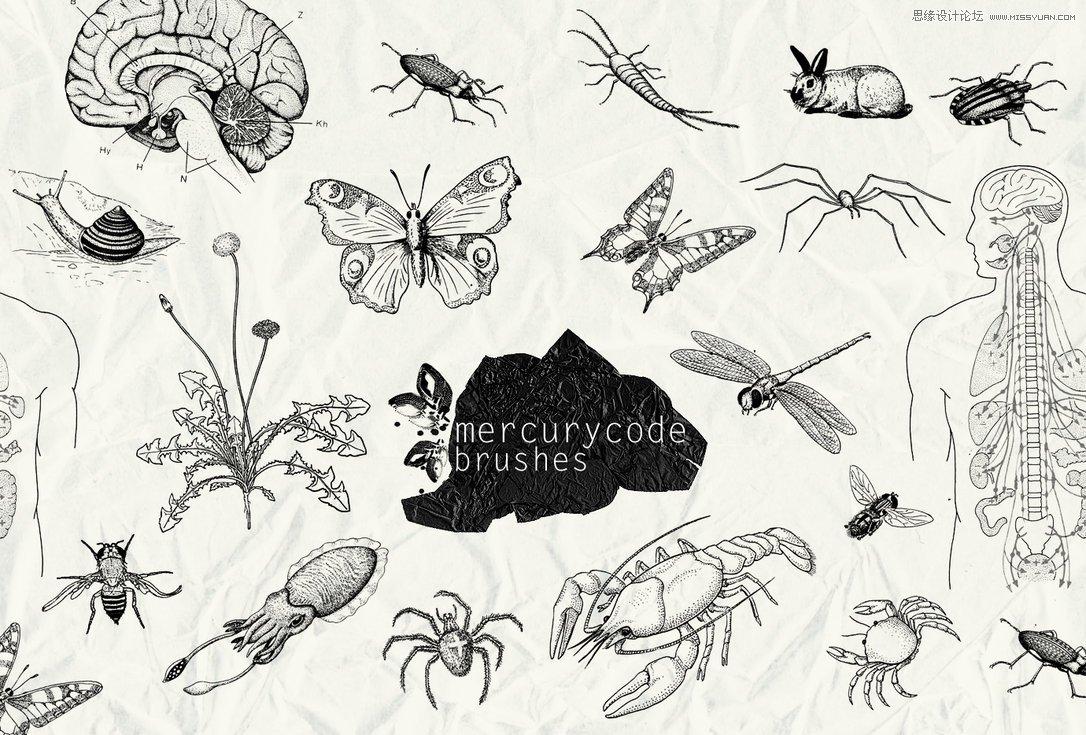 手绘效果的动物笔刷图片