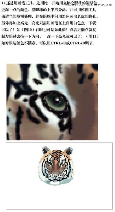 photoshop手绘草丛中的老虎插画