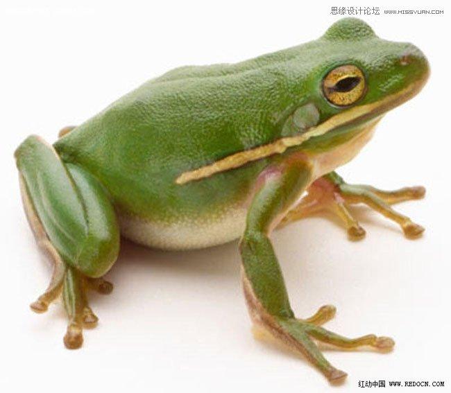 PS教學-合成一隻晶瑩剔透的青蛙