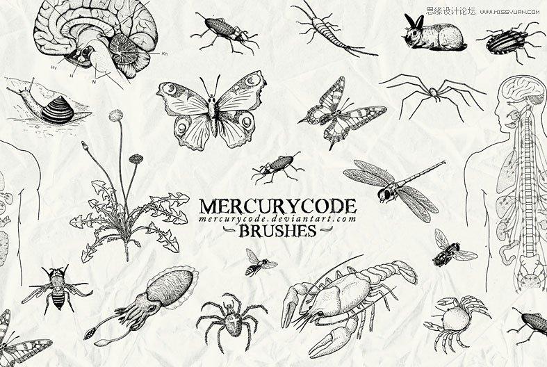 手绘线稿效果的风筝笔刷 手绘枯树效果笔刷 唯美的蝴蝶花纹笔刷 手绘