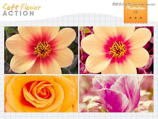 花朵照片柔美紫色效果调色动作