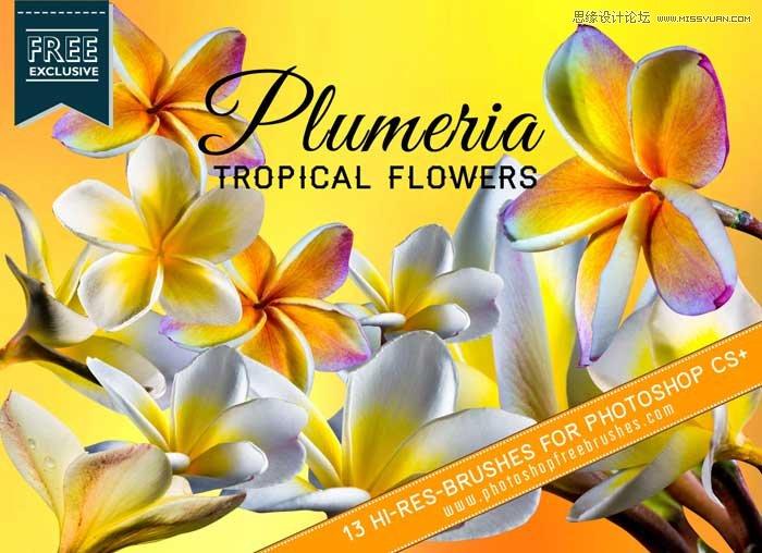热带花朵花卉效果PS笔刷