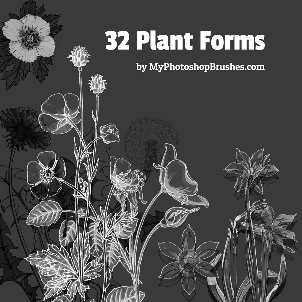 32款植物线描花朵花卉PS笔刷