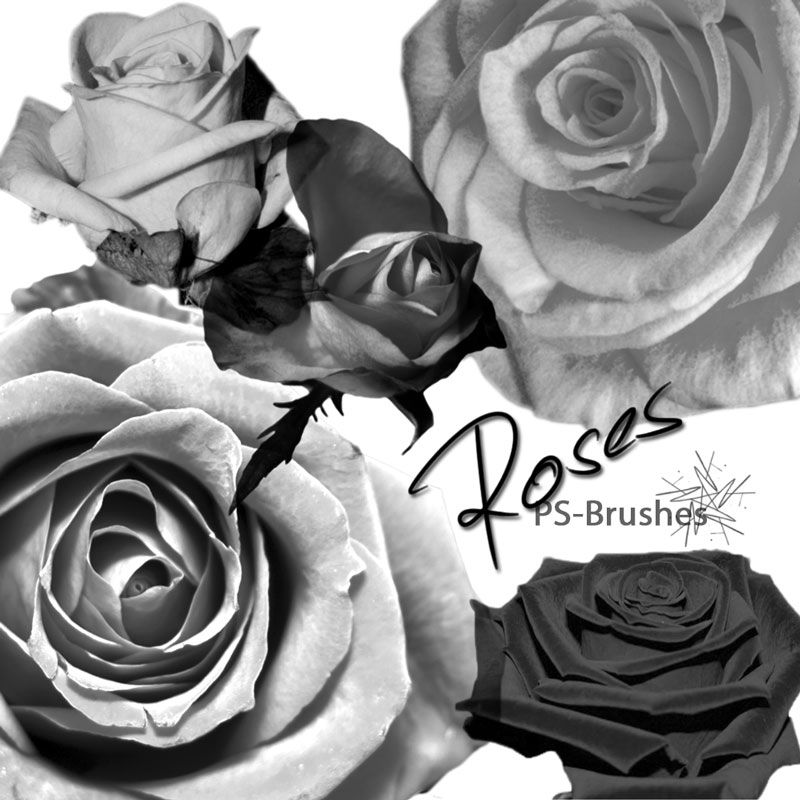 玫瑰花花朵和花卉PS笔刷