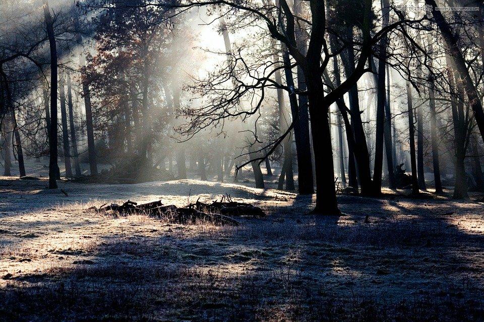photoshop简单给森林照片添加丁达尔光线效果 - ps区