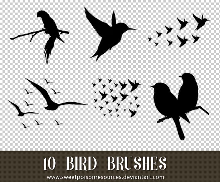 小鸟和鸟群PS笔刷