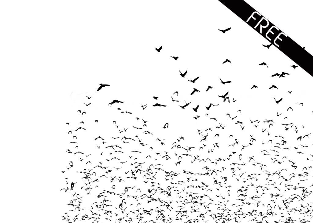小鸟树枝和鸟群装饰PS笔刷