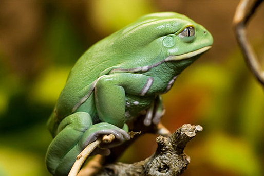 Photoshop合成童話場景里的青蛙王子海報