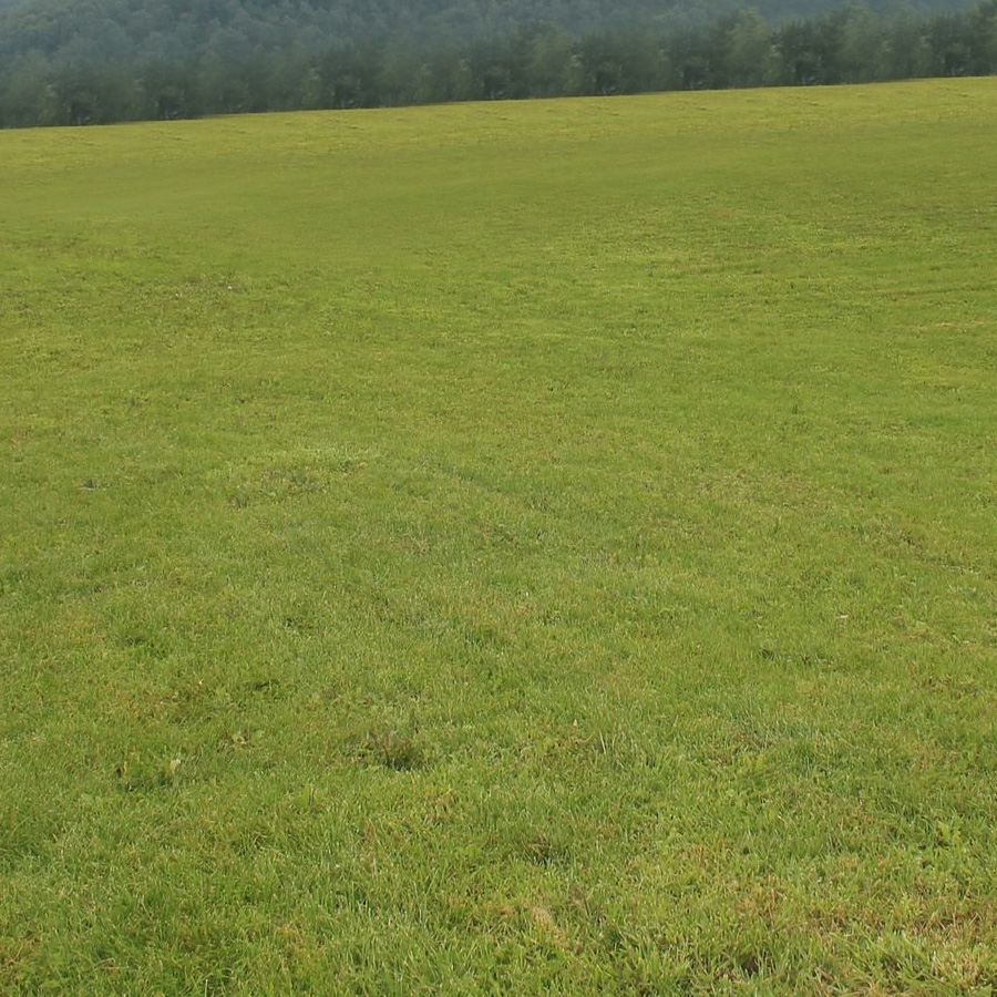 1,首先把下面的草地素材保存到本机,打开ps软件,再打开保存的草地