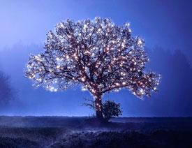 澳门永利官方娱乐网站制作星光装饰的圣诞树【英】