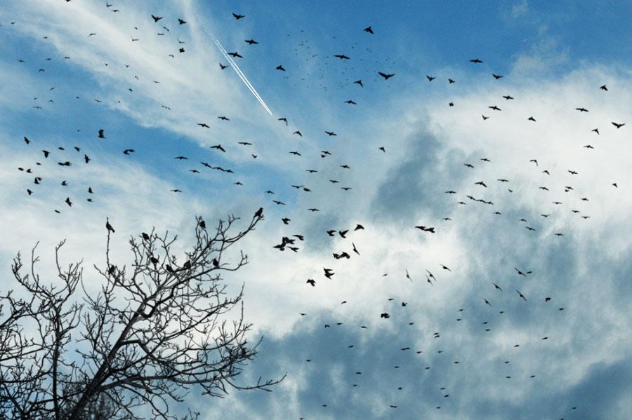 天空中飞翔的鸟群PS笔刷