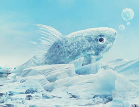 澳门永利官方娱乐网站合成冰冻特效的金鱼场景【英】