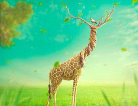 澳门永利官方娱乐网站合成长着创意大树的长颈鹿【英】
