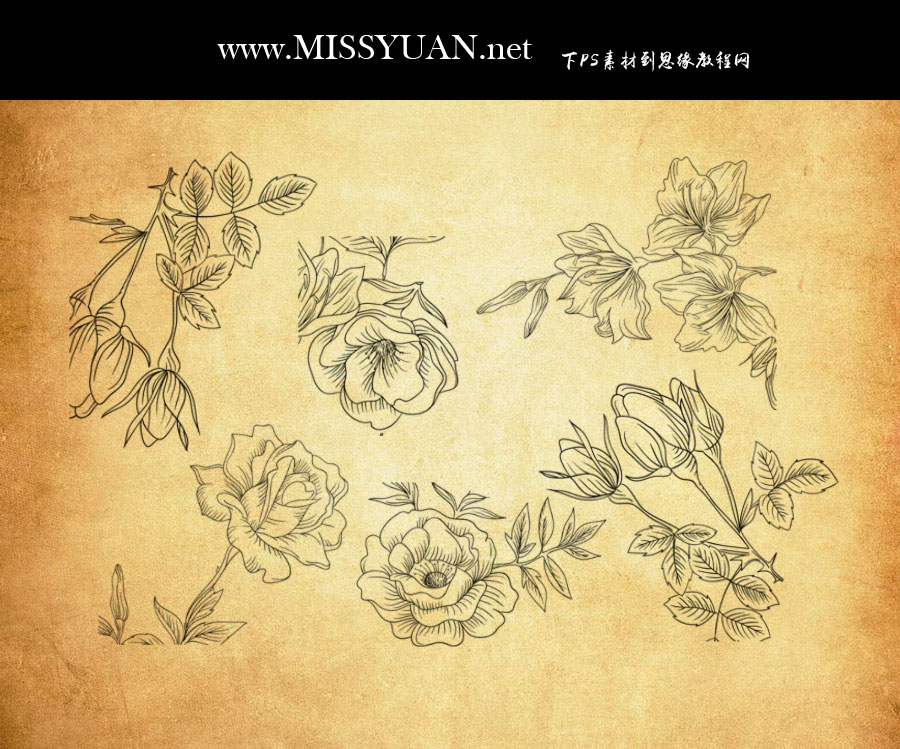 手绘花朵和枝叶装饰ps笔刷