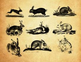 可爱的兔子图像PS笔刷