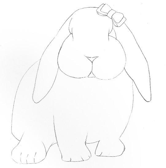 详解彩色铅笔画之垂耳兔的画法