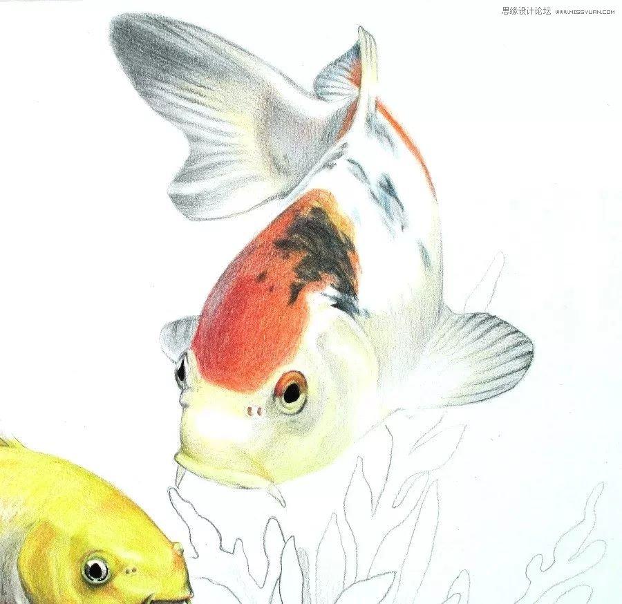 彩色铅笔画之幸运锦鲤的画法(2)