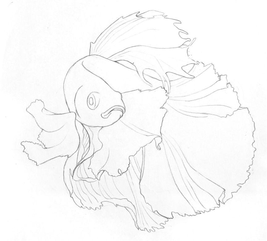 完成图效果  Step 线稿起型 1.观察斗鱼的体态特征,鱼鳍和巨大飘逸的尾巴,占据了画面绝大部分空间。 2.基于数个球形,用2B铅笔快速勾勒出斗鱼的大致结构。 提示:这一步不需要考虑过多细节,用较长的曲线勾勒即可。  3.进一步修整斗鱼鱼鳍的裙摆,背鳍的形状较为特别。 提示:注意裙摆微小曲线,具备错落的变化会更加优美。