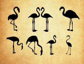 高清晰火烈鸟剪影图形PS笔刷