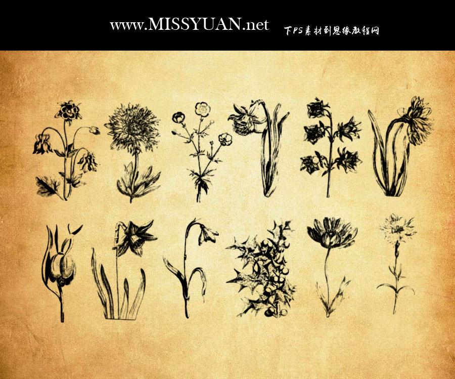 手绘素描花朵和花枝PS笔刷