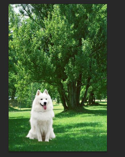 photoshop抠出在草地上做着的毛茸茸小狗 - ps转载区