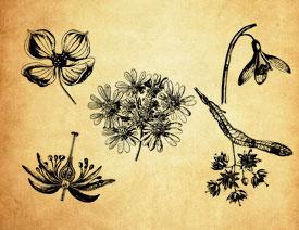 手绘彼岸花等花朵PS笔刷