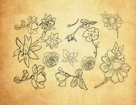 手绘线描花朵和花枝PS笔刷