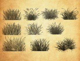 草丛和植物装饰PS笔刷