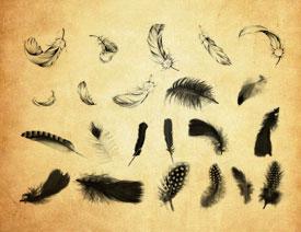 动物和鸟类羽毛装饰PS笔刷