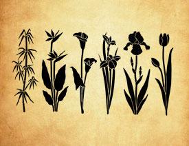 矢量风格花卉和竹子PS笔刷