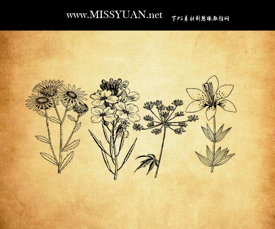 手绘花朵和花枝植物PS笔刷