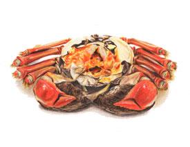彩色铅笔画之手绘美食大闸蟹