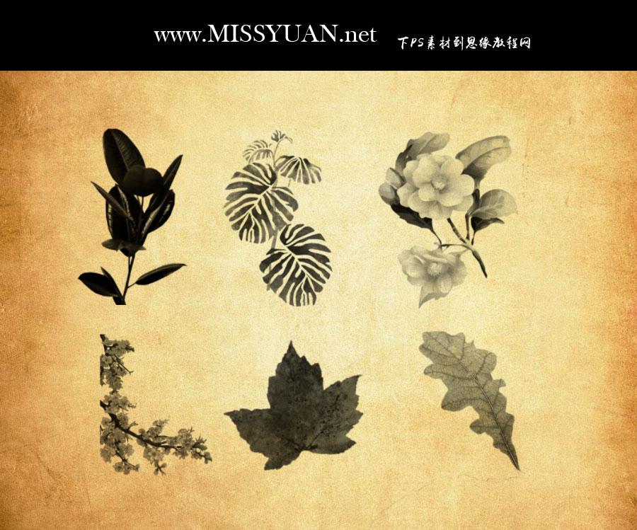 手绘植物叶子装饰PS笔刷