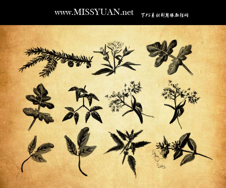 水彩植物和藤蔓PS笔刷