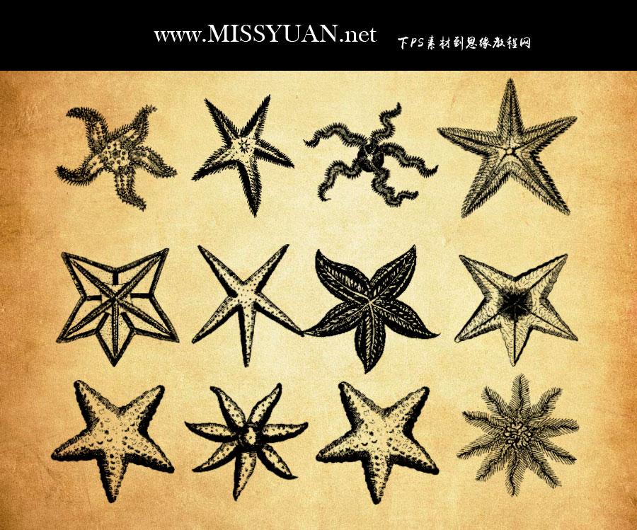 各种逼真的海星图案PS笔刷