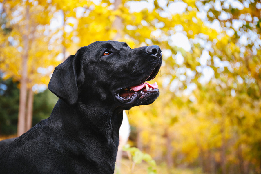 摄影师详解如何拍摄黑色宠物,PS教程,思缘教程网