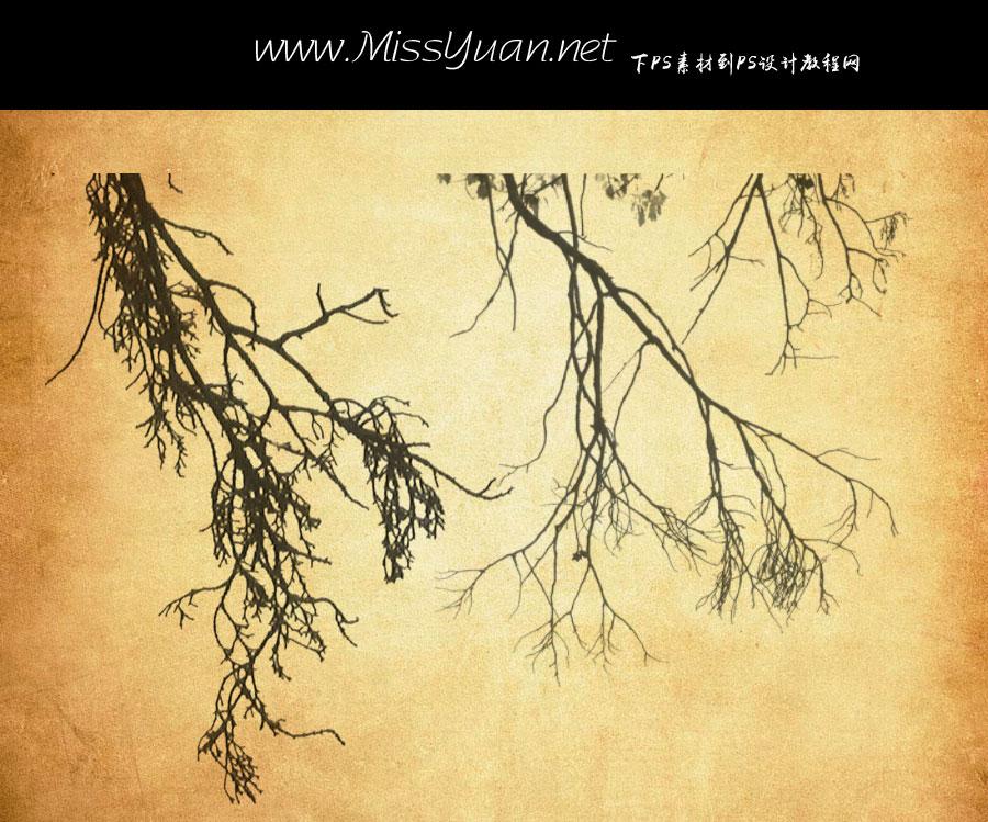 枯树和树枝PS笔刷
