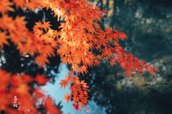 lr调出秋季人像照片古典艺术效果图片