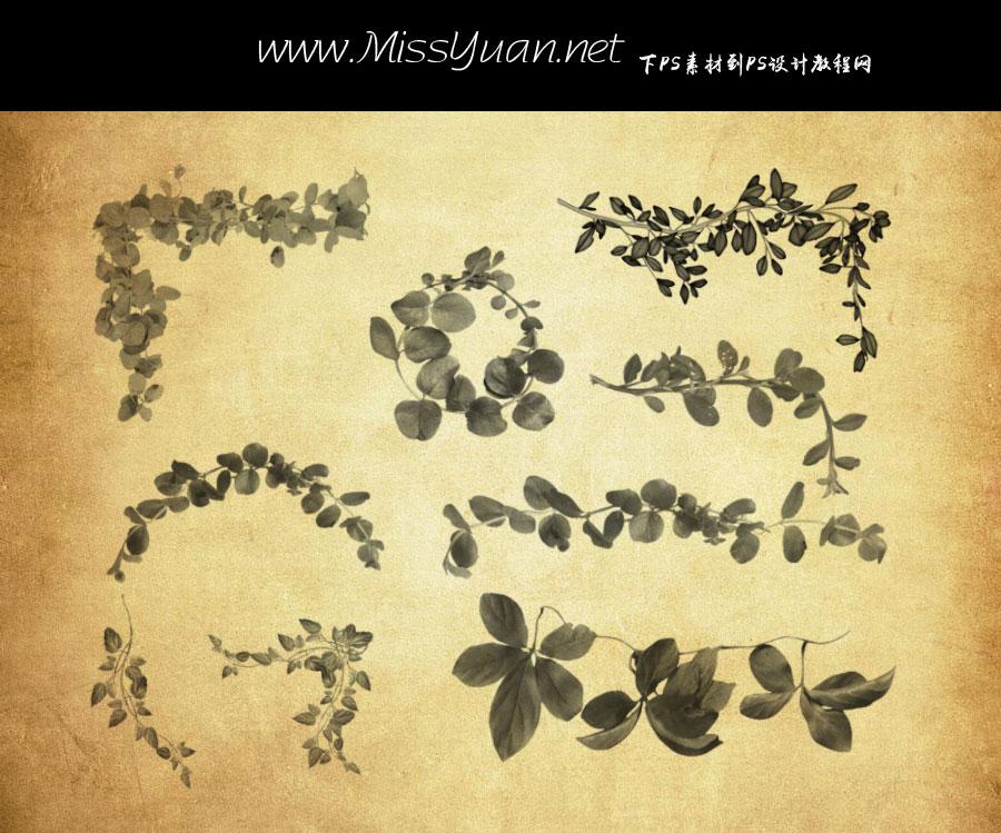 20款植物藤蔓和藤条PS笔刷