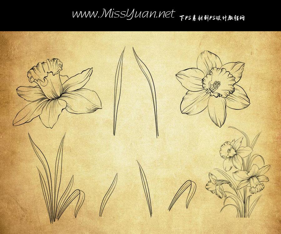 手绘线描叶子和花朵PS笔刷
